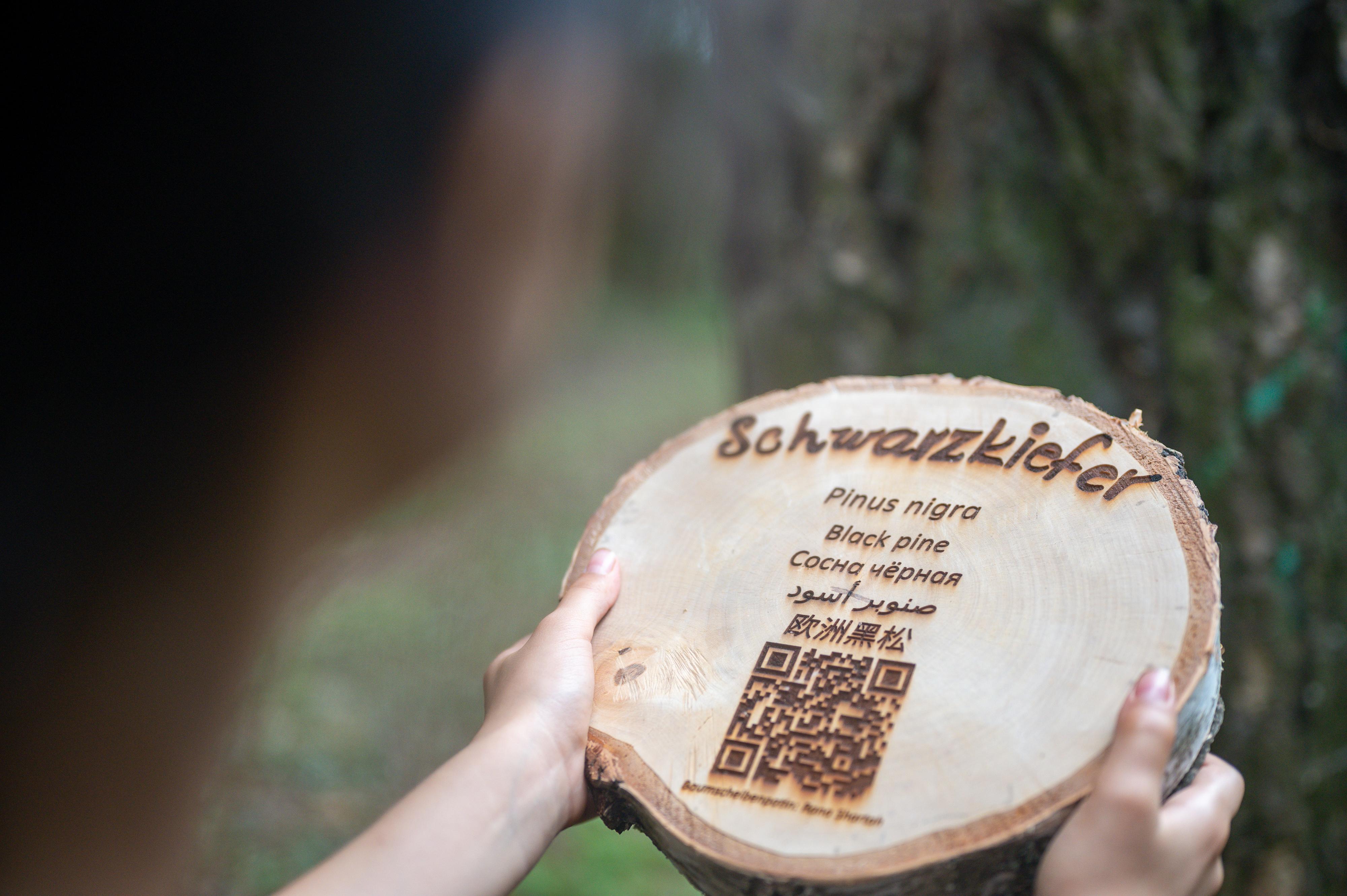 """Eine Kinderhand hält eine Baumscheibe hoch. Darauf die Inschrift """"Schwarzkiefer"""" und darunter """"Pina Negra"""". Weiter darunter befindet sich ein QR-Code"""
